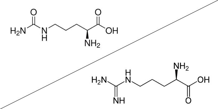 シトルリンとアルギニンの化学式