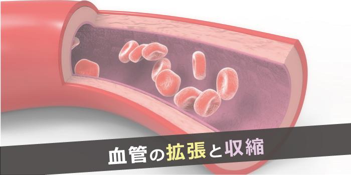 血管の拡張収縮遺伝子
