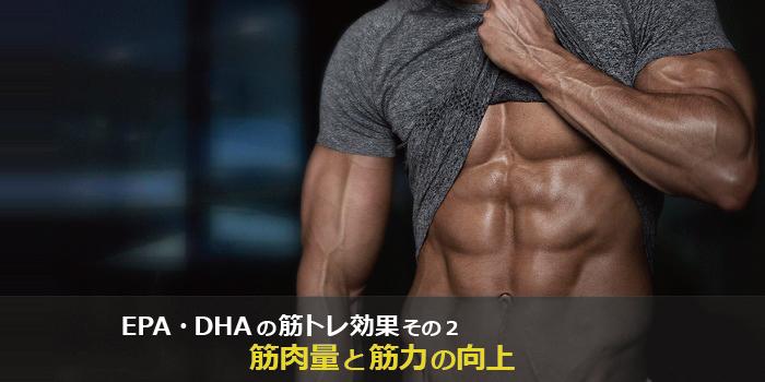 epaとdhaの筋トレ、筋肉への効果2