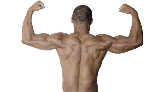 腕相撲で使う背筋