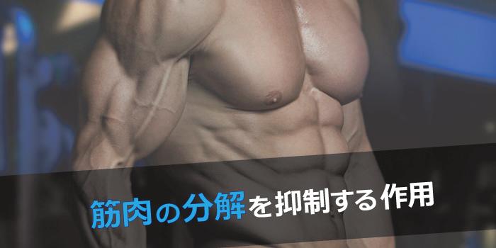 筋肉の分解抑制