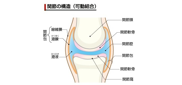 関節の構造(画像引用元:goo)