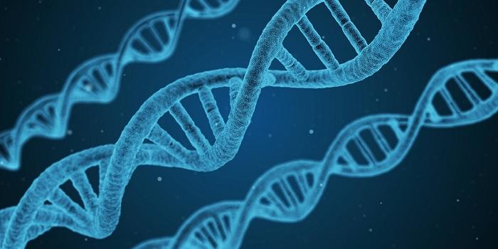 筋トレ効果DNA体質