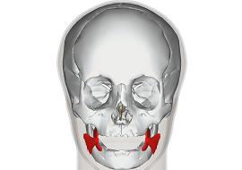 口角を支える筋肉