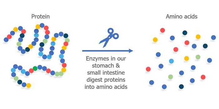 myproteinマイザイム
