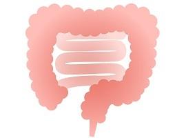 プロテインとおならの原因:腸内環境