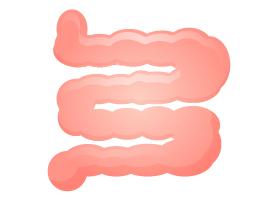 プロテインとおならの関係:小腸